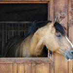Où faire de l'équitation à Paris ?